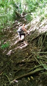 Aihualama Trail. I'm almost horizontal trying to get across these roots on the trail.